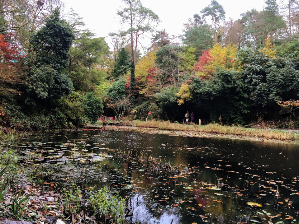 Japanese pond at Portmeirion
