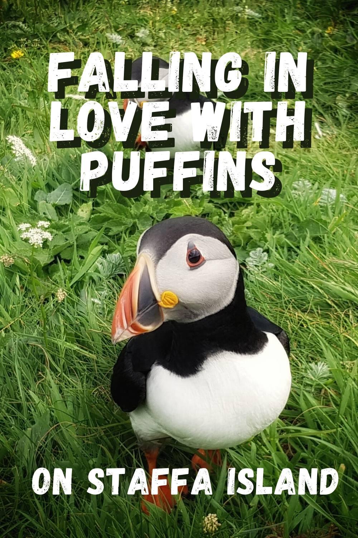 Puffins on Staffa Island